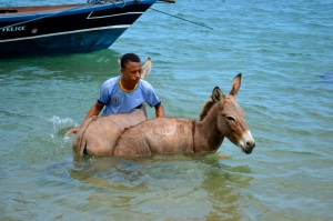 Washing donkeys in Lamu